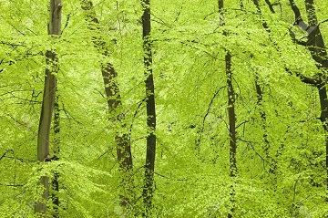 13874988-fresh-green-forest-in-spring-tb