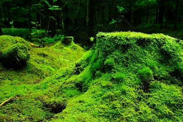 forest-483206_960_720-tb