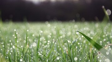 nature-and-plants-rain-drops-on-green-grass-great-morning-scene-tb