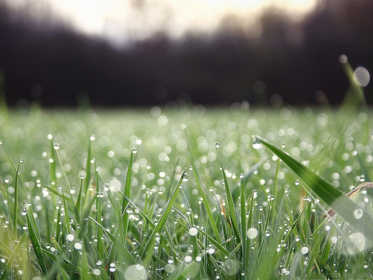 nature-and-plants-rain-drops-on-green-grass-great-morning-scene