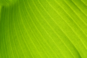 texture-background-back-light-fresh-green-leaf_43798-49-tb