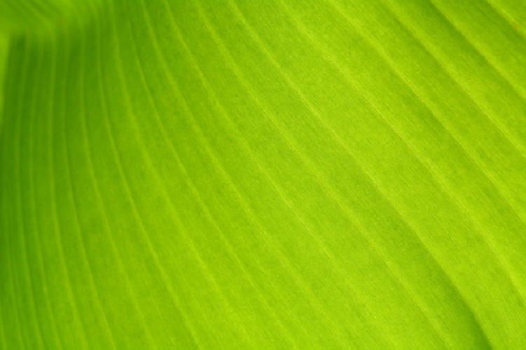 texture-background-back-light-fresh-green-leaf_43798-49